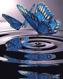 corina vlinder oorsprong