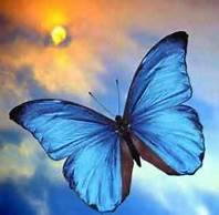 vlinder en zon